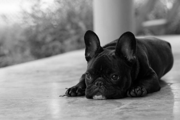 Watson en noir et blanc